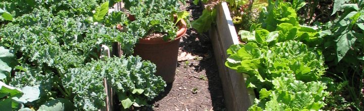 The Garden: Raised Beds made from a Recycled Delivery Pallet